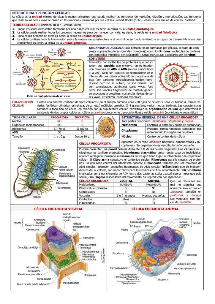 Estructura Y Función Celular Célula Eucariota