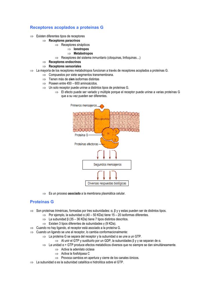 Receptores de membrana acoplados a proteina g
