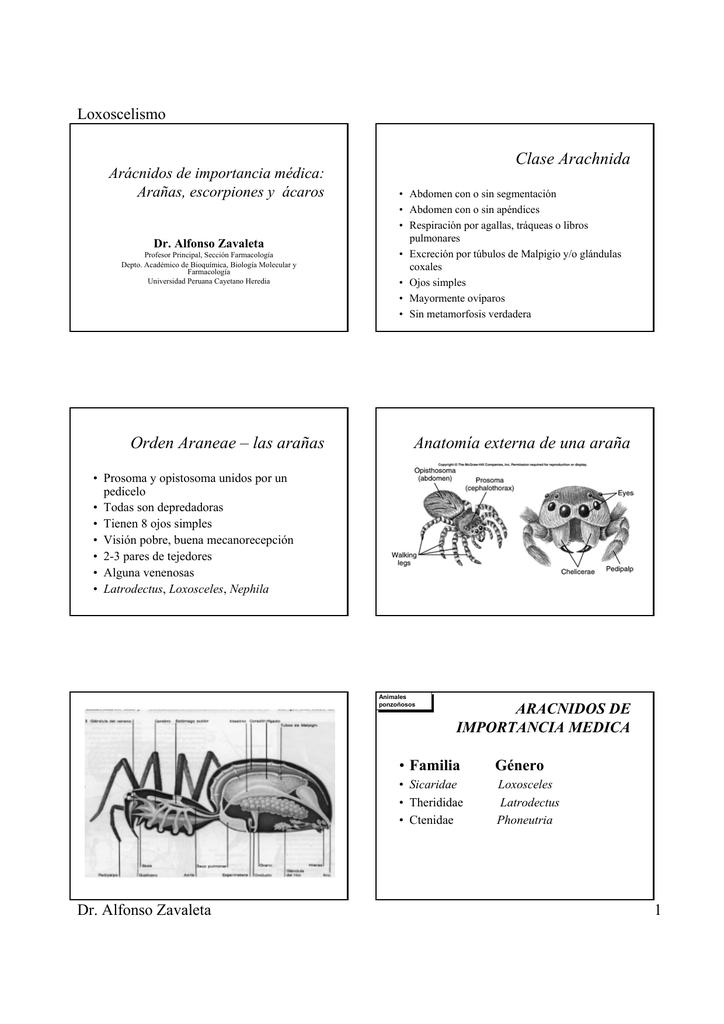 Clase Arachnida Orden Araneae – las arañas