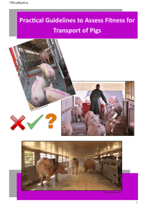 Practical Guidelines to Assess Fitness for Transport of Pigs
