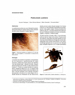 Pediculosis pubiana