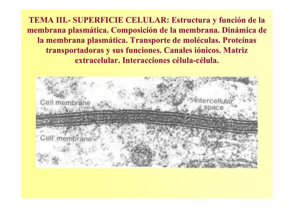 Tema Iii Superficie Celular Estructura Y Función
