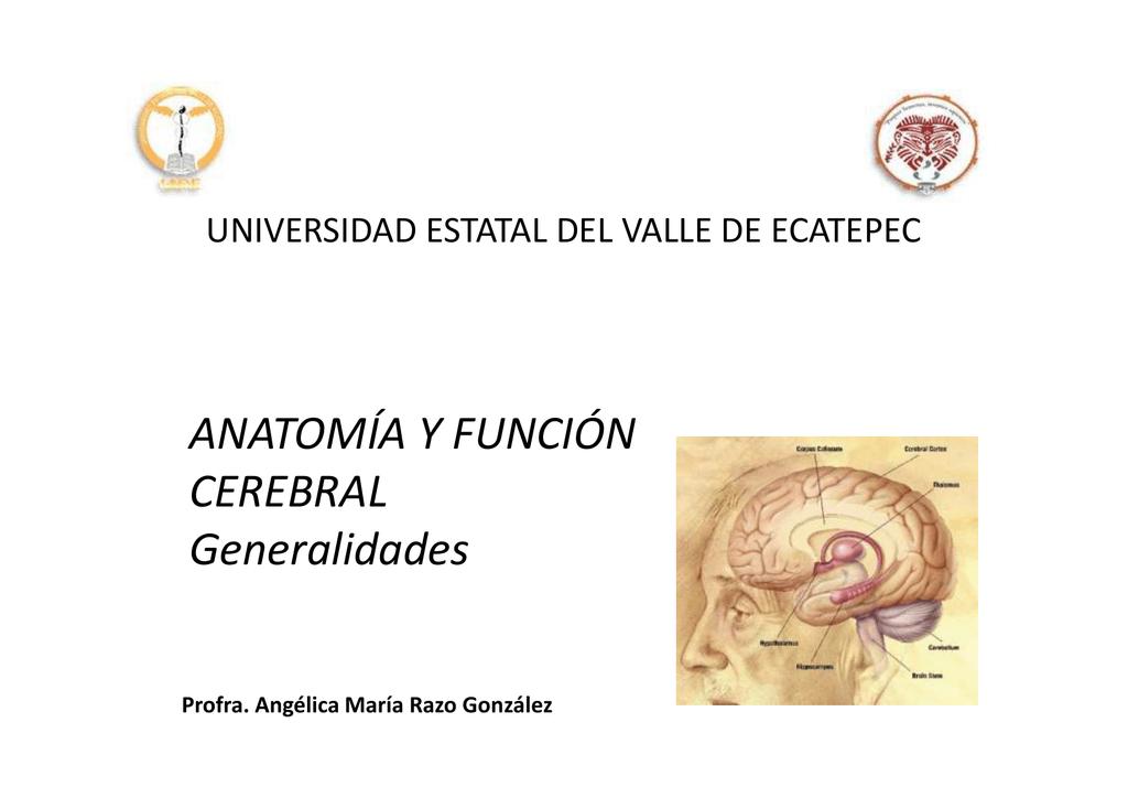 Generalidades de la anatomía y función cerebral