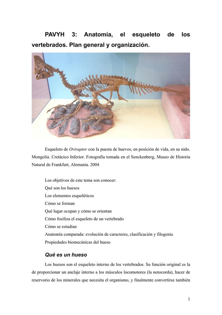PAVYH 3: Anatomía, el esqueleto de los vertebrados. Plan general y
