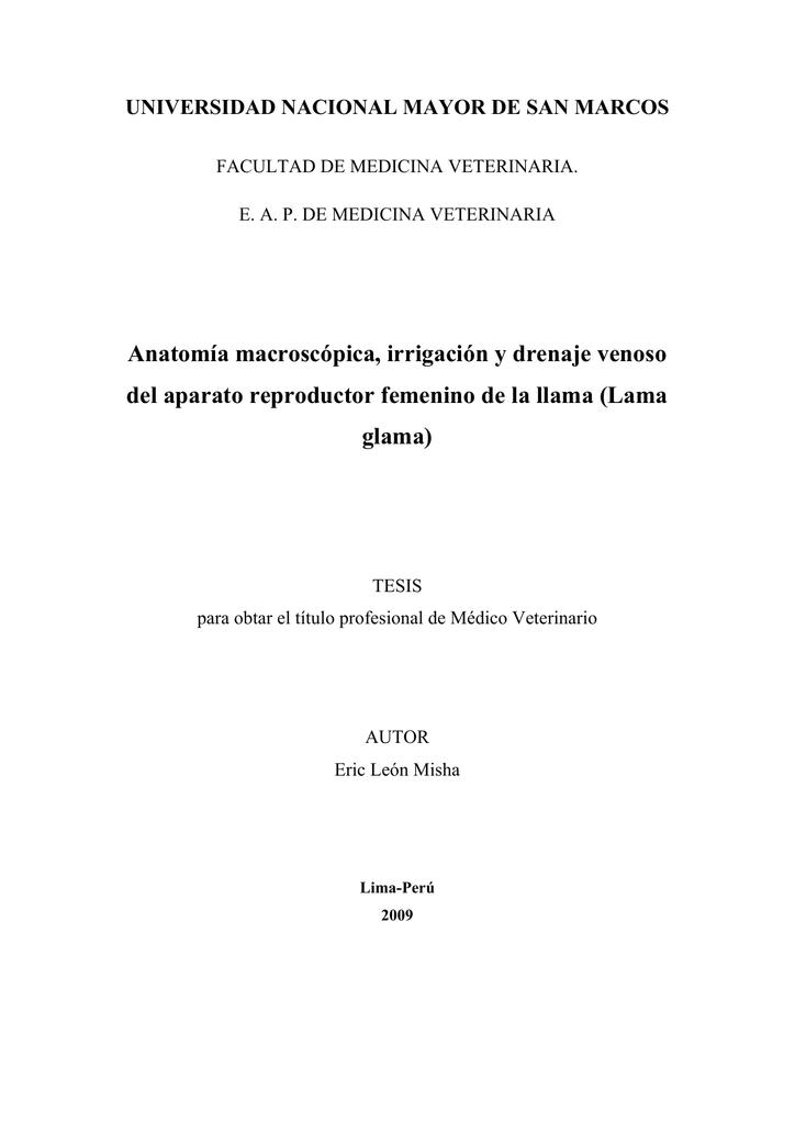 Anatomía macroscópica, irrigación y drenaje venoso del aparato