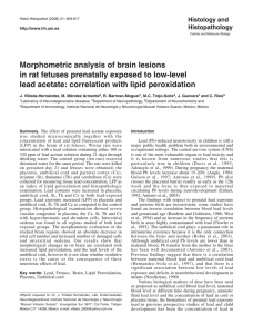 Morphometric analysis of brain lesions in rat fetuses prenatally