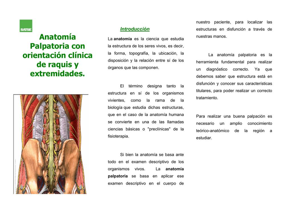 Dorable La Forma De Estudiar La Anatomía Inspiración - Imágenes de ...