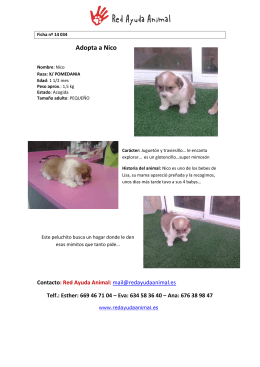 Adopta a Nico - Red Ayuda Animal