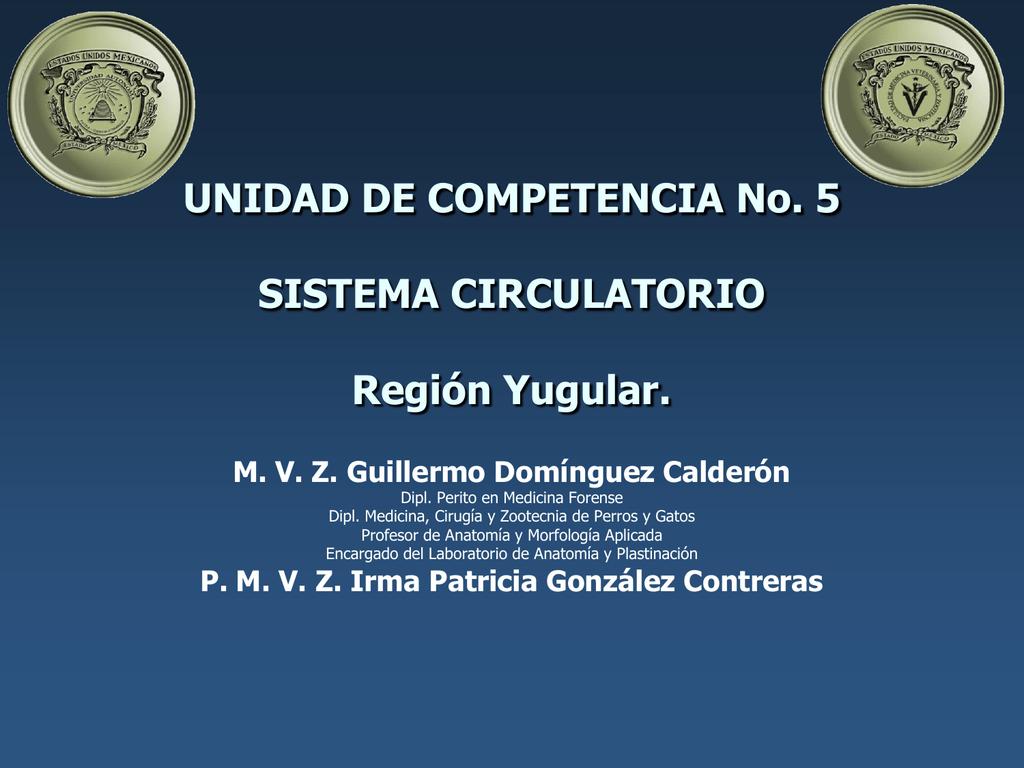 Región Yugular - anatomiayplastinacion