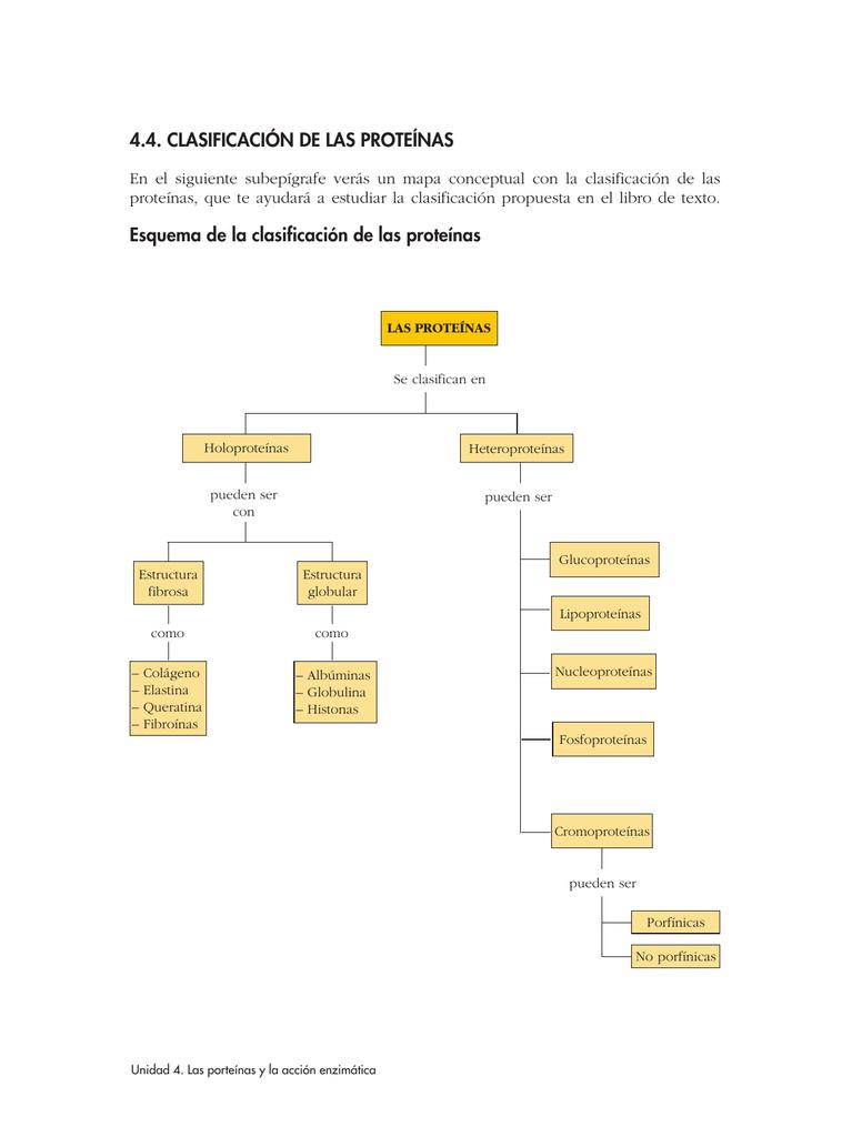 4 4 Clasificación De Las Proteínas Esquema De La