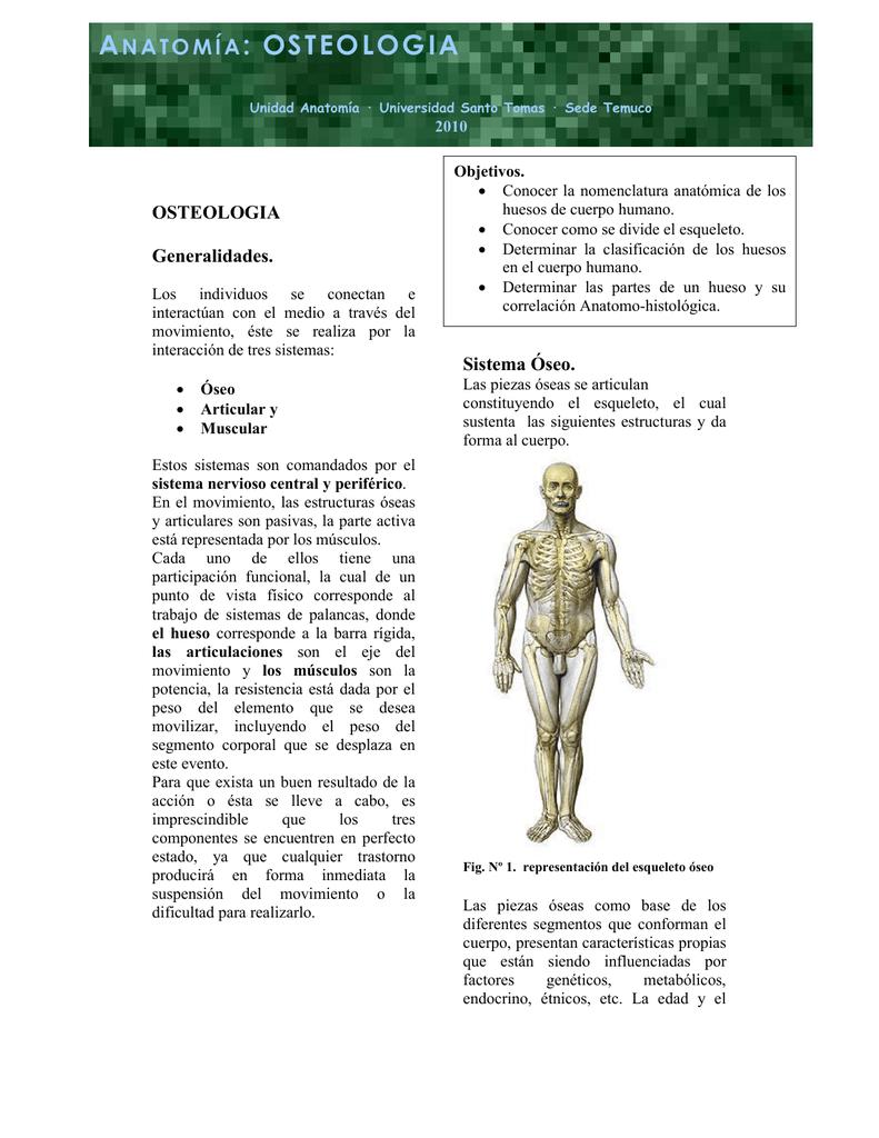 ANATOMÍA: OSTEOLOGIA