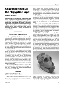 Aegyptopithecus the `Egyptian ape`