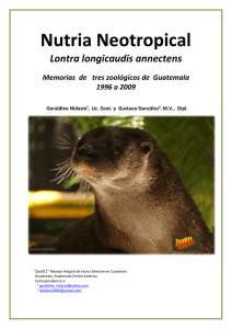 Nutria Neotropical - IUCN Otter Specialist Group