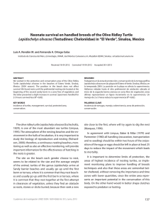 Neonate survival en handled broods of the Olive Ridley Turtle
