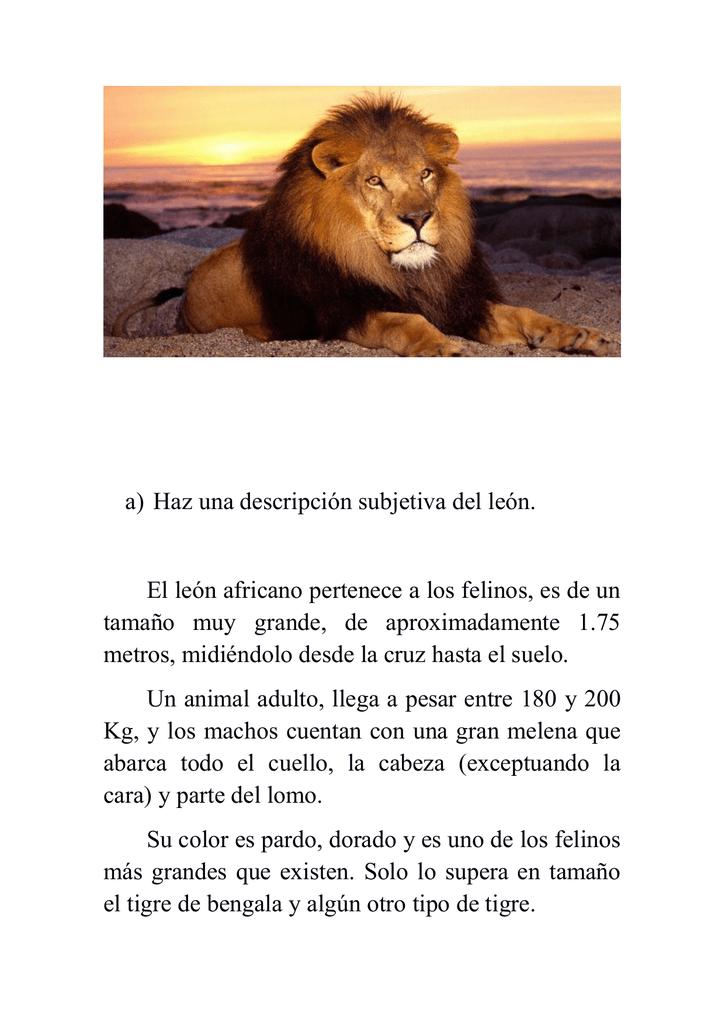 a) Haz una descripción subjetiva del león. El