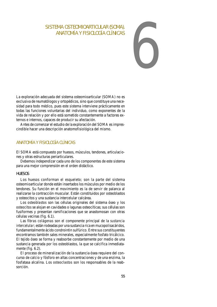 Sistema osteomioarticular ( SOMA ). Anatomía y fisiología clínica.