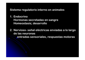 Sistema regulatorio interno en animales 1. Endocrino Hormonas