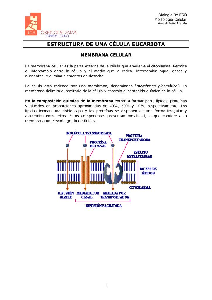 Estructura Cadiciencias
