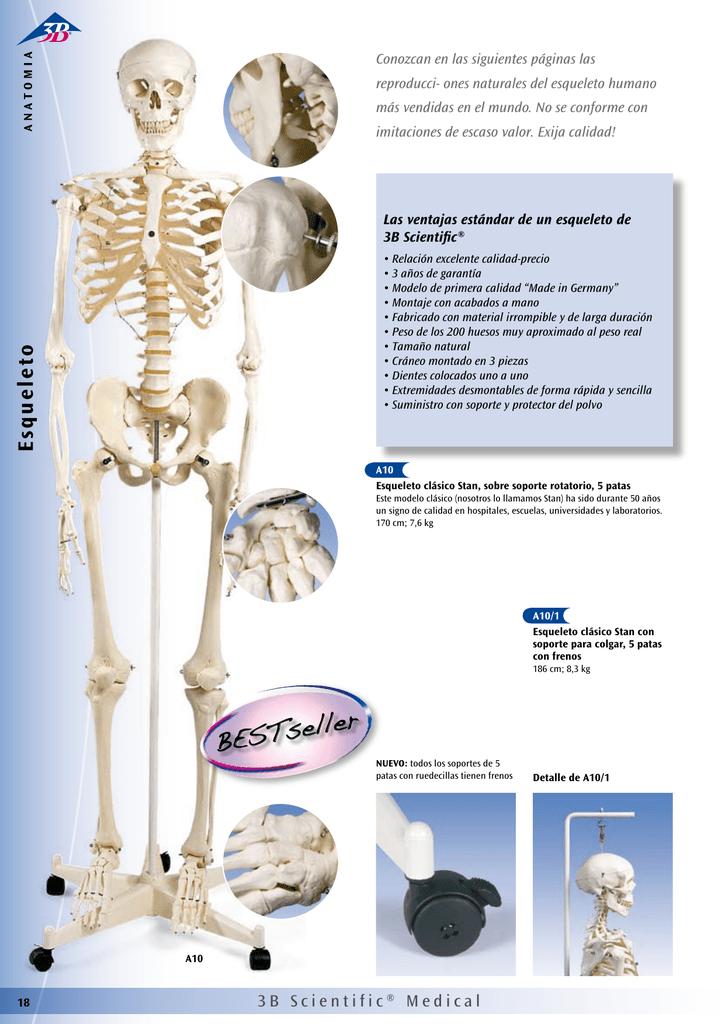 Esqueleto-Componentes
