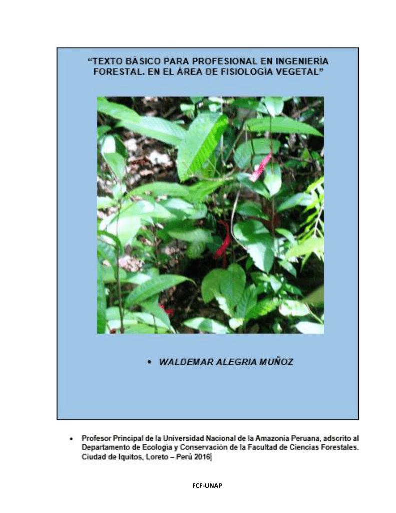 Fraxinus pennsylvanica Semillas del Norte Red /árbol de ceniza 30 semillas