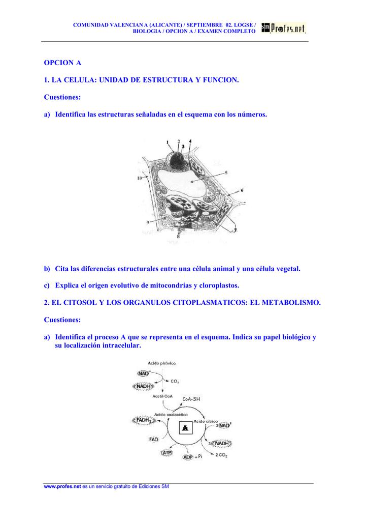 Opcion A 1 La Celula Unidad De Estructura Y Funcion