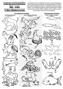 Unidad 13 La Reproducción De Los Animales Para