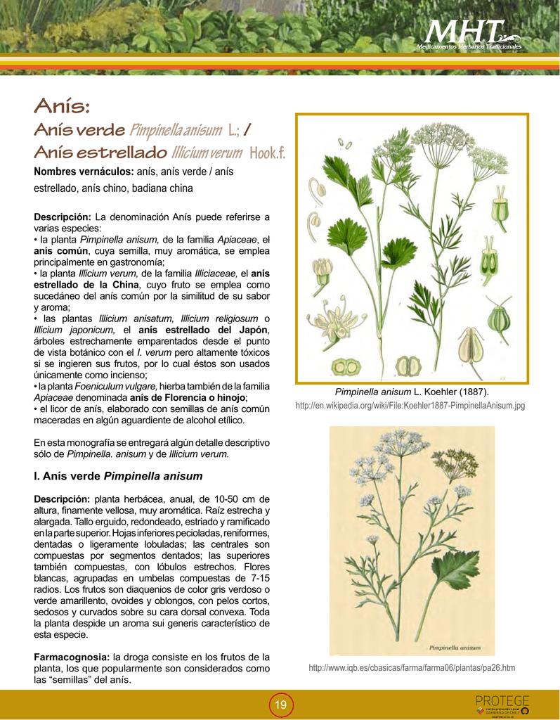 Para que sirve la planta medicinal anis verde