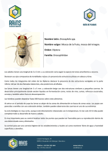 Drosophila spp. - Rains Control de Plagas