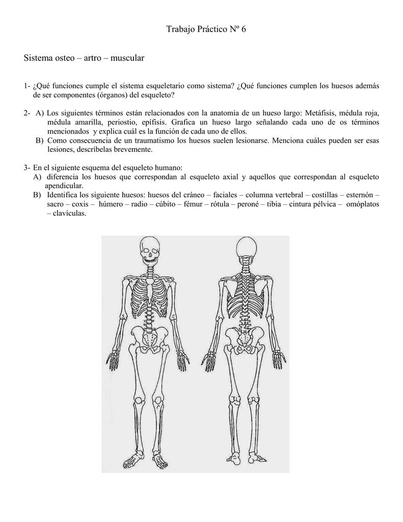 Trabajo Práctico Nº 6 Sistema osteo – artro – muscular