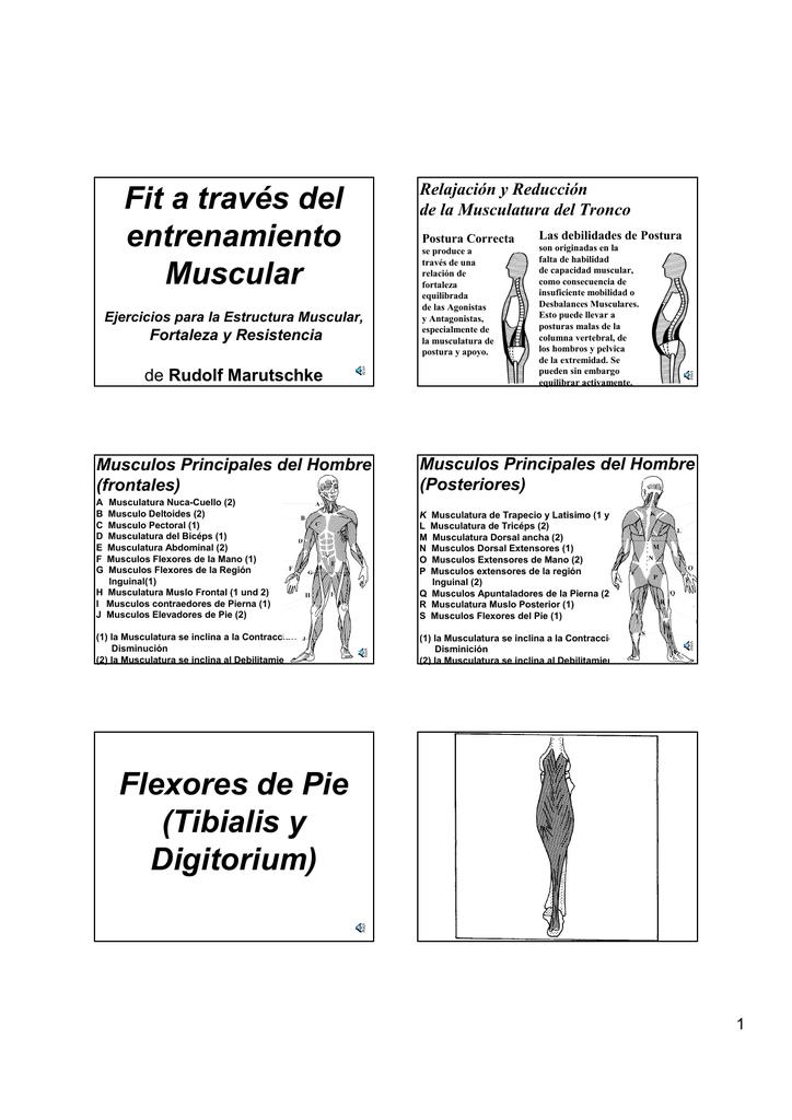 musculos desde la columna hasta el muslo