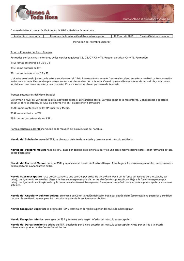 Resumen de la inervación del miembro superior