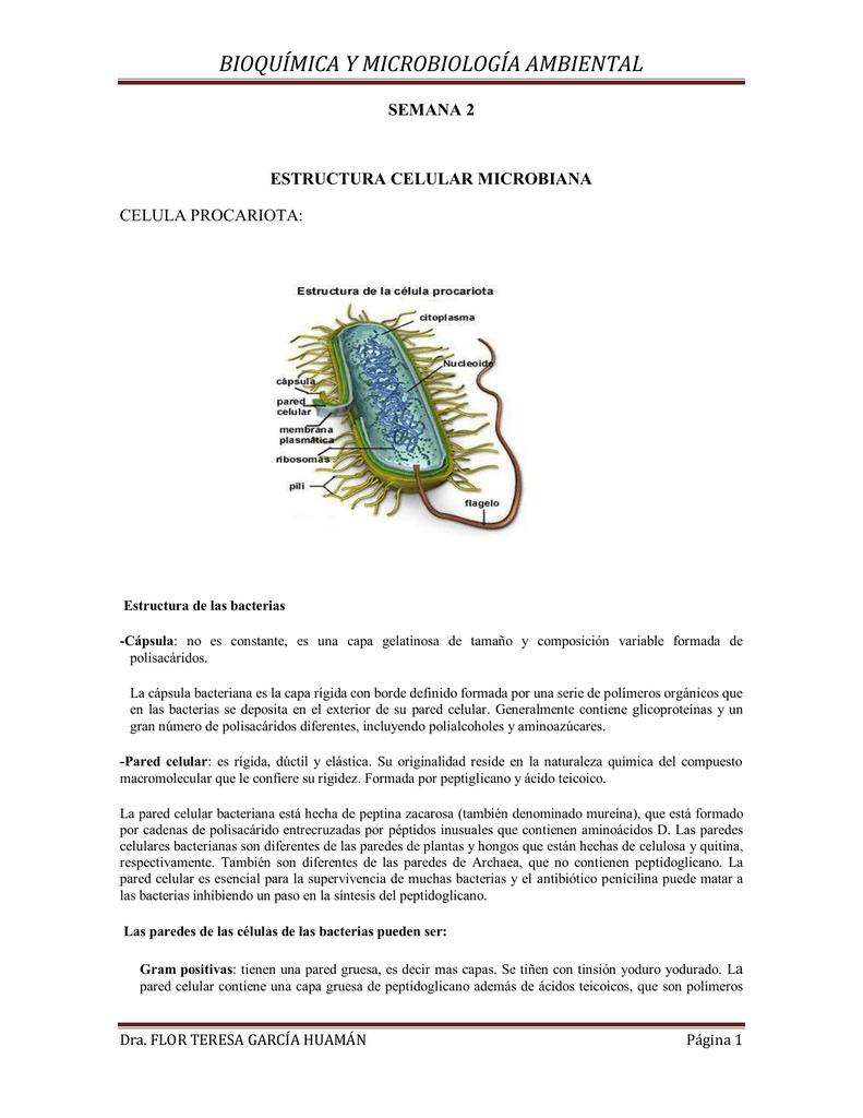 Semana 2 Estructura Celular Microbiana
