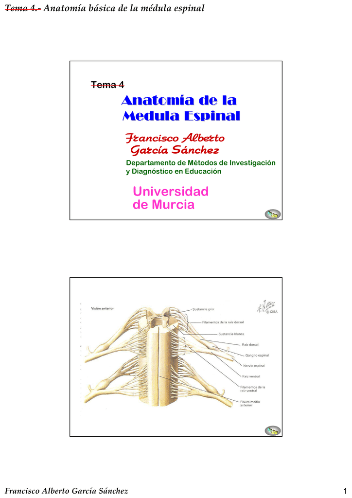 Anatomía de la Medula Espinal Universidad de Murcia