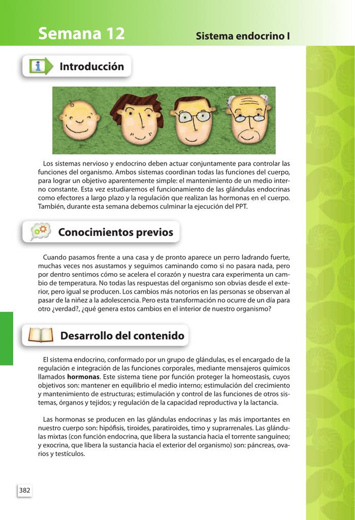 Sistema endocrino I Semana 12