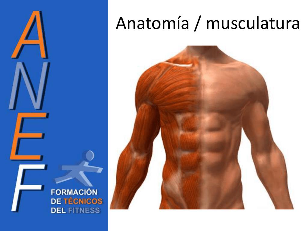 Presentacion Anatomia - Miguel Angel (Nov`12)