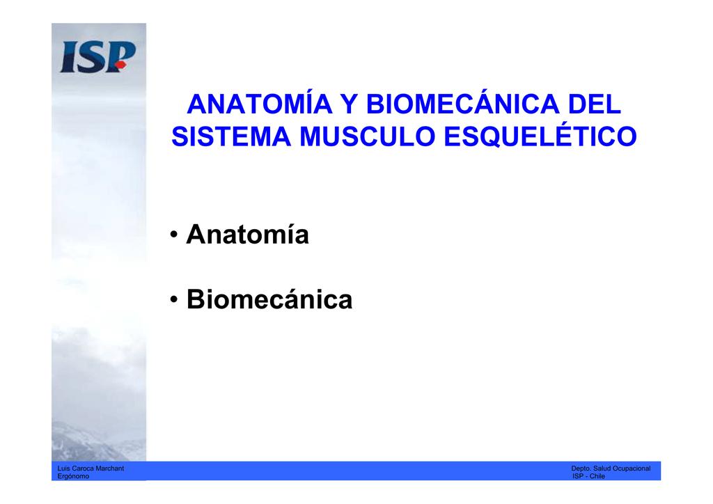 anatomia-biomecanica-antropometria_1