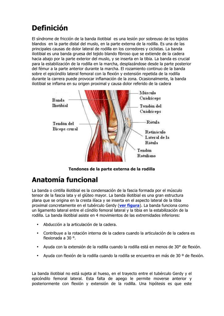 Lujo Definir La Anatomía Lateral Imagen - Imágenes de Anatomía ...