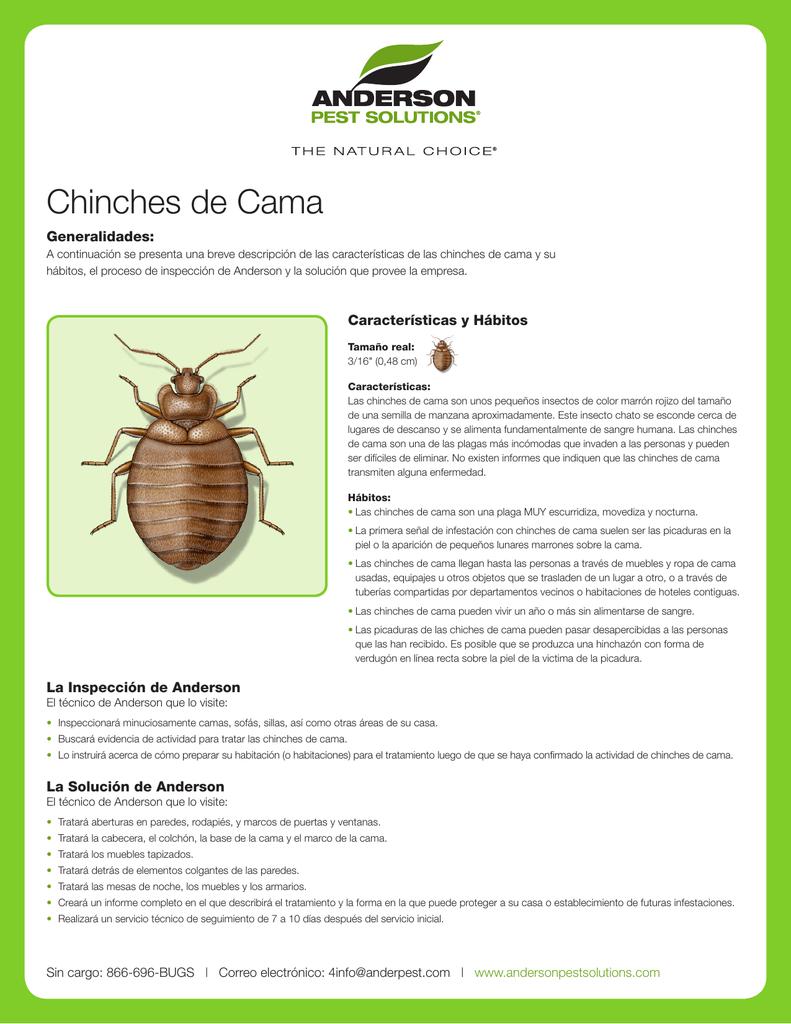 Chinches de Cama - Anderson Pest Control