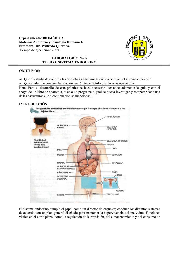 Lujoso Anatomía Y Fisiología Humana Guía De Estudio Regalo ...