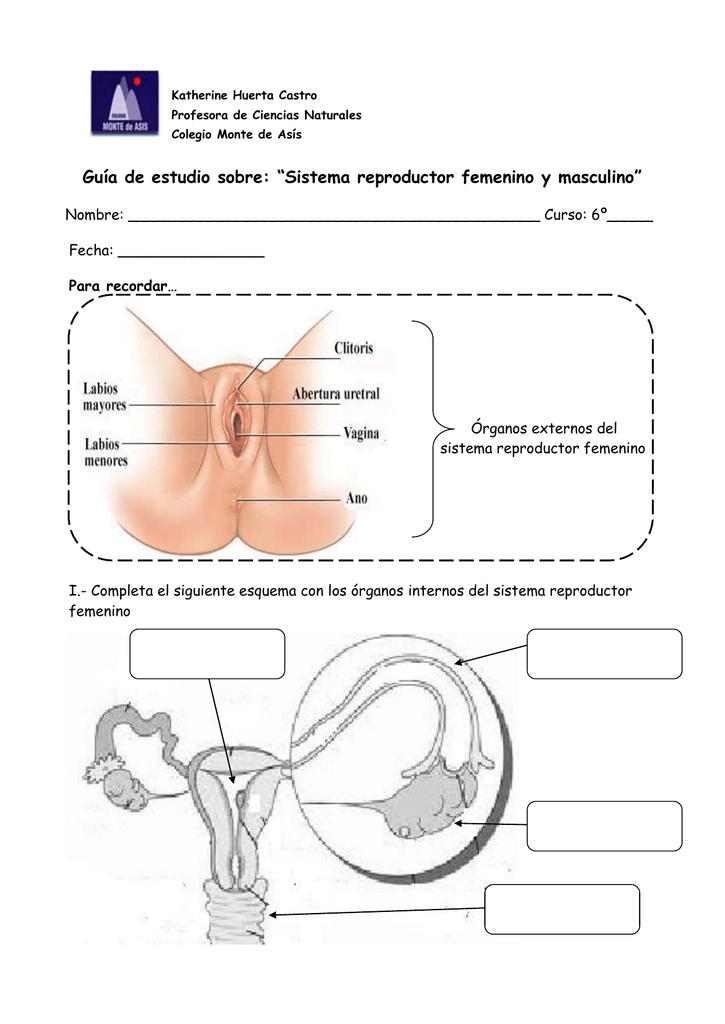 """Guía de estudio sobre: """"Sistema reproductor femenino y masculino"""""""