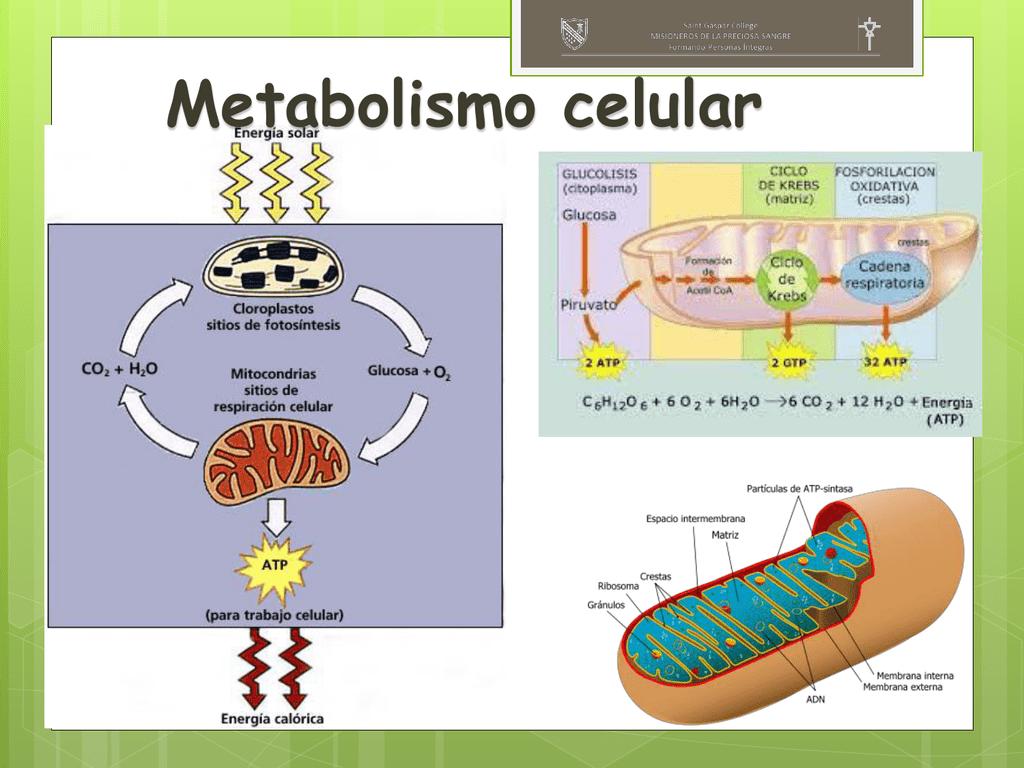 6 maneras fáciles de que posiblemente pueda convertir Acelerar metabolismo en el éxito