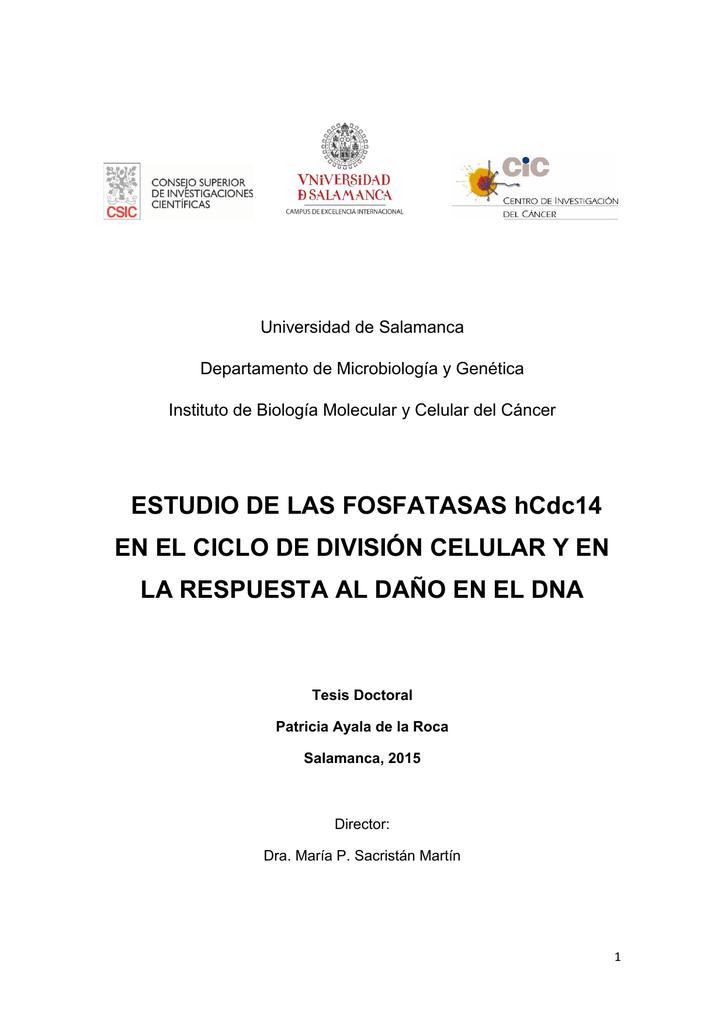 ESTUDIO DE LAS FOSFATASAS hCdc14 EN EL CICLO