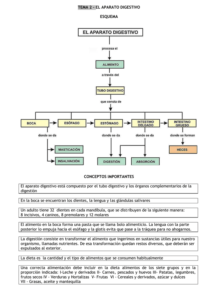TEMA 2 – EL APARATO DIGESTIVO ESQUEMA CONCEPTOS