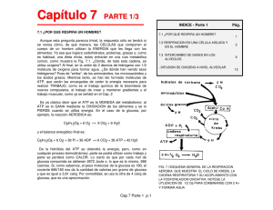 Cap 7 Parte 1 - Biomed-UC