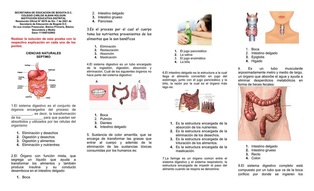 1.El sistema digestivo es el conjunto de órganos encargados del