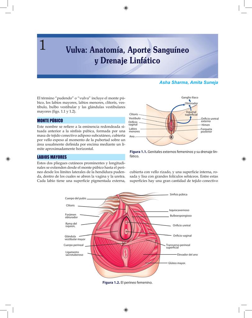 Vulva: Anatomía, Aporte Sanguíneo y Drenaje Linfático