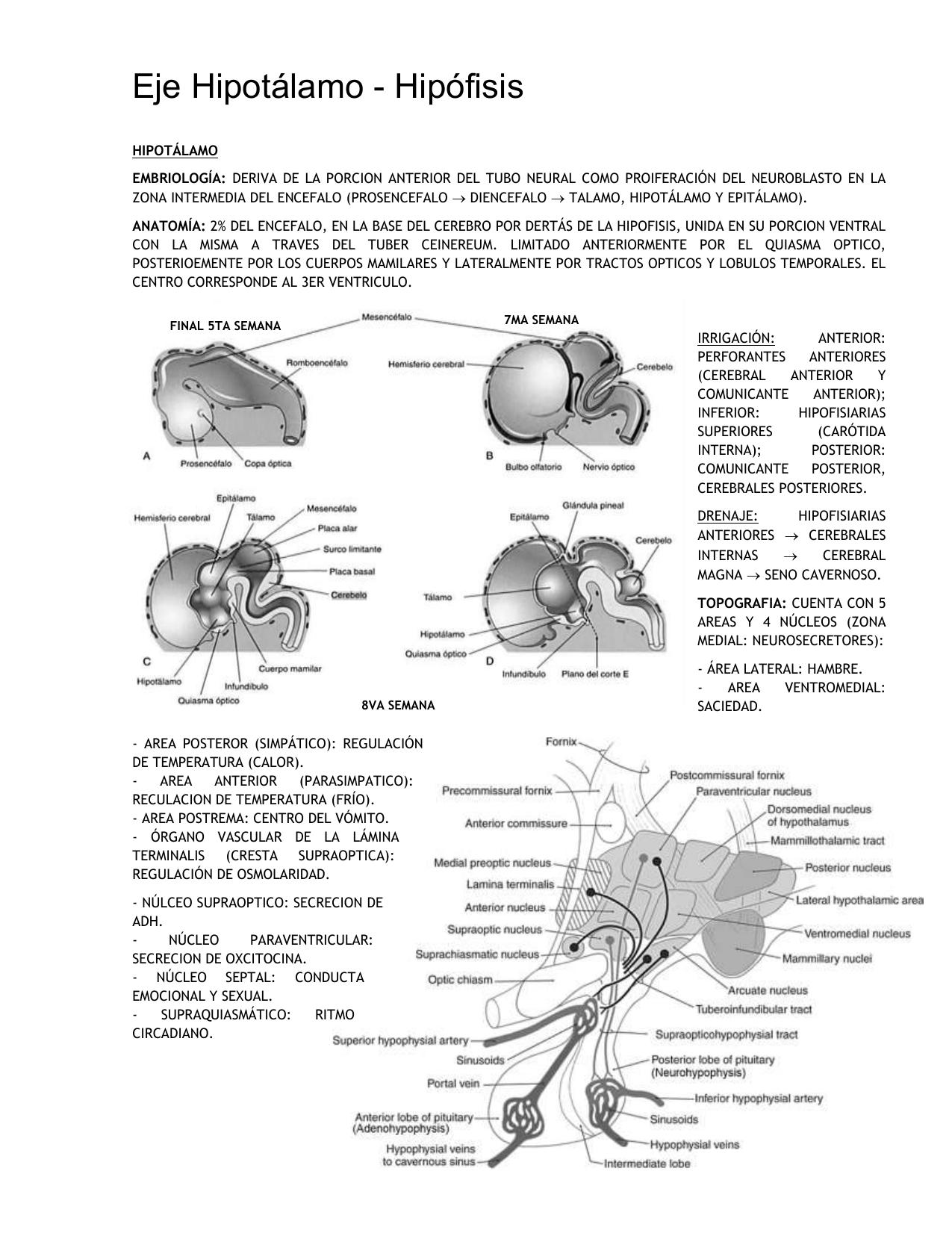 Irrigacion arterial de la hipofisis