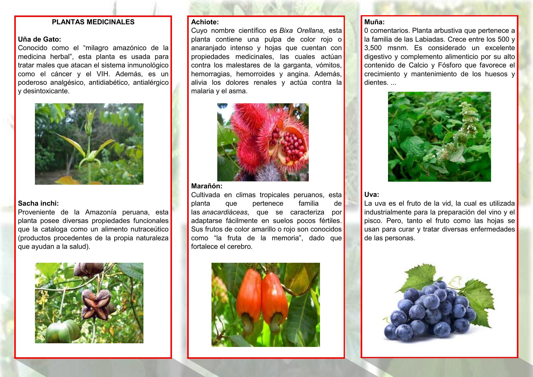 plantas medicinales su nombre cientifico y gestation que sirven