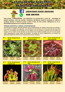 CATALOGO CARNIVORINKA