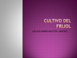 cultivodefrijol-120917194156-phpapp02 (1)